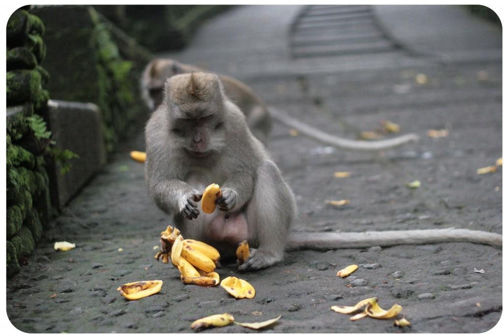 Sacred Monkey Forest, Ubud, Bali
